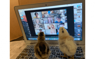 Beginnings Students Receive Virtual Visit from Baby Chicks